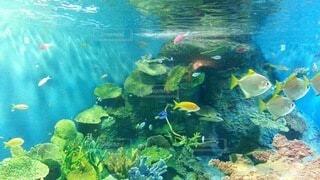 水の中で泳ぐカラフルな魚たちの写真・画像素材[4639698]