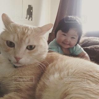 猫の写真・画像素材[20775]