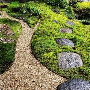 自然,風景,屋外,緑,葉,草,岩,地面,草木