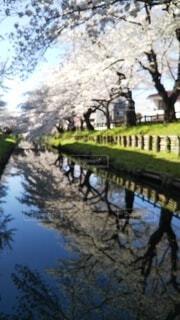 桜並木🌸の写真・画像素材[4576093]