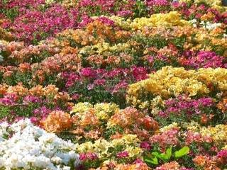 画面いっぱいの花園の写真・画像素材[4613749]