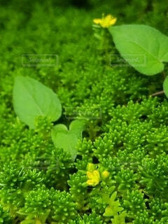 緑の中に黄色のアクセントの背景画像の写真・画像素材[4615667]