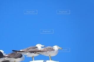 並んでとまる鴎の写真・画像素材[4653059]