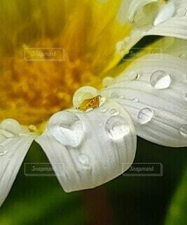 水滴の中の花のシベの写真・画像素材[4736881]