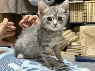 家にきた初日の子猫の写真・画像素材[4578904]
