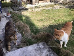 お互いを認識する猫の写真・画像素材[4598262]