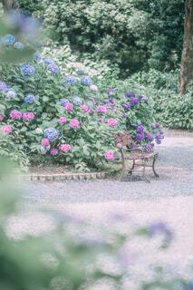ベンチと紫陽花の写真・画像素材[4610011]