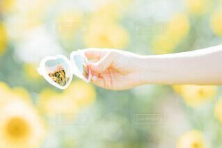 サングラスとひまわりの夏らしいイメージ写真の写真・画像素材[4677189]