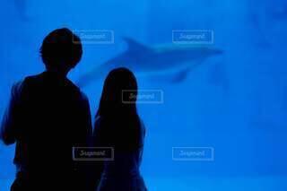 水族館でイルカを鑑賞するカップルの写真・画像素材[4714495]