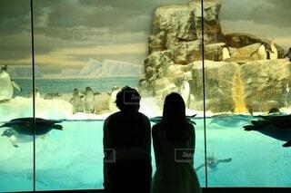 水族館でペンギンを眺めるカップルの写真・画像素材[4714497]