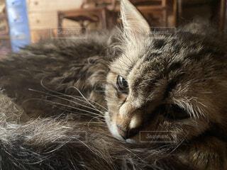猫,動物,屋内,かわいい,床,リラックス,アップ,ネコ科