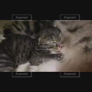 猫,かわいい,子猫,ミルク,子育て