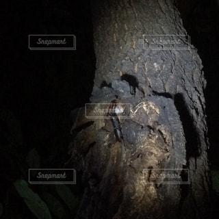 No.202663 森林
