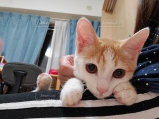 テーブルの上に座っている猫の写真・画像素材[4593227]