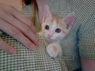 毛布の上に座っている猫の写真・画像素材[4594547]
