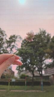 子ども,自然,風景,空,公園,花,植物,プレゼント,草木