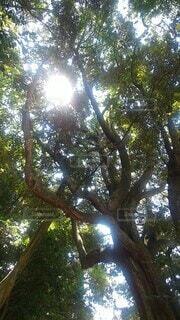 自然,空,森林,屋外,緑,樹木,草木,木洩れ日,日中,太陽の光,蝉の声