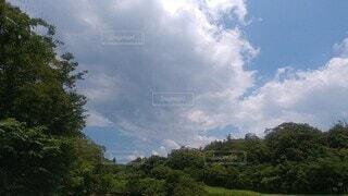 自然,風景,空,森林,屋外,雲,樹木,田園,蝉の声