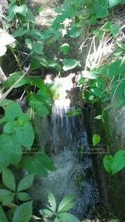 夏,屋外,水面,草,草木,水の勢い,水の涼やかさ,小川の流れ