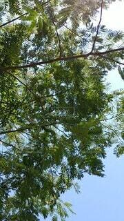 空,夏,屋外,葉,樹木,風,風にたなびく木々