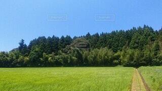 自然,風景,空,夏,屋外,緑,景色,樹木,新緑,田園,風,たなびく稲