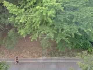 鬱蒼と生い茂る木々の脇を1人で走る男性ランナー①の写真・画像素材[4612858]