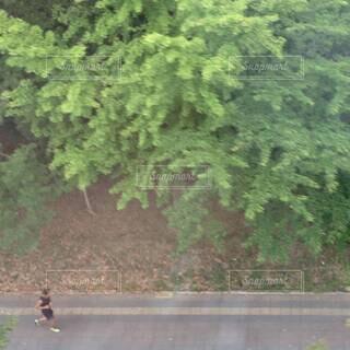 鬱蒼と生い茂る木々の脇を1人で走る男性ランナー②の写真・画像素材[4612859]