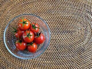 家庭菜園、穫れたて新鮮プチトマト。の写真・画像素材[4631516]