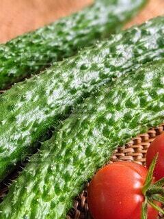 トゲトゲか痛いくらい新鮮な穫れたてキュウリとプチトマト。の写真・画像素材[4654400]