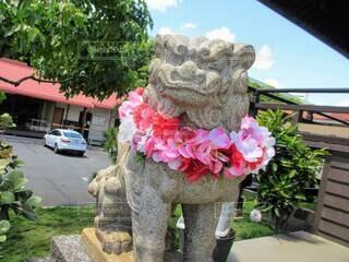 南国の神社に鎮座する、首にレイをかけた狛犬。の写真・画像素材[4695322]