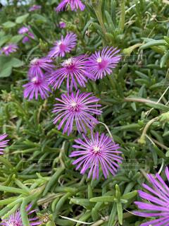 自然,花,綺麗,紫,背景,奇跡,素材,希望
