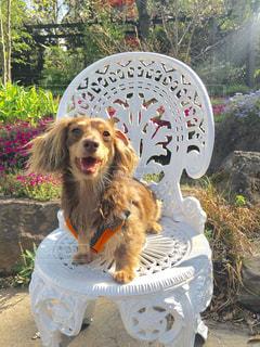 フリスビー犬 - No.749556
