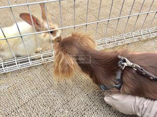 檻の中の小動物の写真・画像素材[749603]
