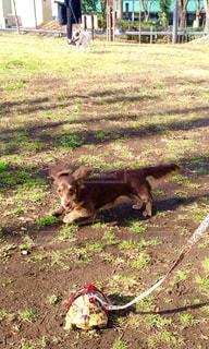 草の上に横たわる犬の写真・画像素材[749637]