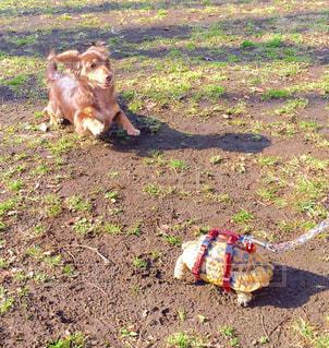 汚れフィールドの上に横たわる犬の写真・画像素材[749640]