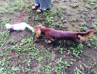 草の中に立っている犬の写真・画像素材[749661]