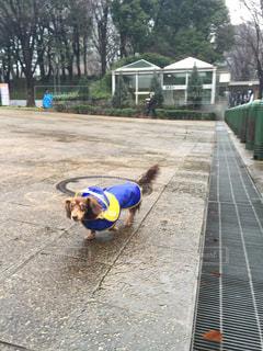 犬の写真・画像素材[838308]