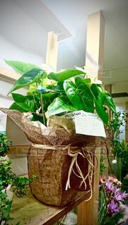 花,屋内,花瓶,野菜,植木鉢,観葉植物,草木