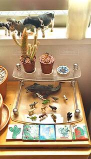 屋内,花瓶,小物,植木鉢,窓辺,置物,雑貨,オブジェ,観葉植物
