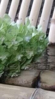 花,木,緑,あじさい,水,涼しい,竹,観葉植物,湧き水
