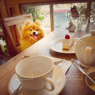 ポメラニアン,コーヒー,花瓶,テーブル,マグカップ,食器,カップ,ドリンク,ボウル,コーヒー カップ,受け皿