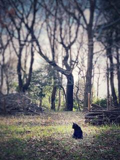 自然,屋外,黒,草,樹木,黒猫