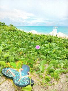海,花,屋外,緑,ビーチ,雲,水面,沖縄,旅行,ビーチサンダル,小浜島