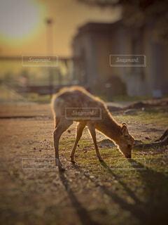 動物のクローズアップの写真・画像素材[4629368]