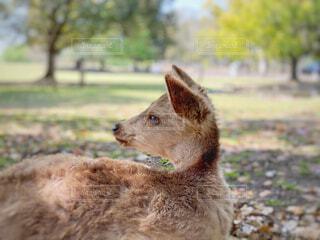 動物のクローズアップの写真・画像素材[4629370]