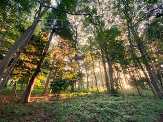 自然,風景,空,公園,屋外,緑,散歩,光,草,樹木,朝陽,早朝,落葉,草木,カエデ