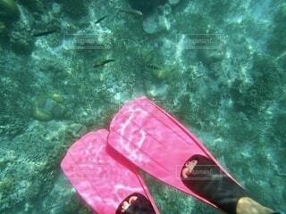 海の中のピンクのフィンの写真・画像素材[4663092]