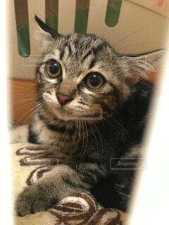 怖がっている猫の写真・画像素材[4607864]