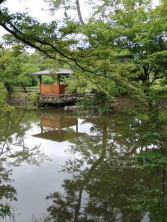 京都,森,水面,梅雨,植物園,草木,梅雨空