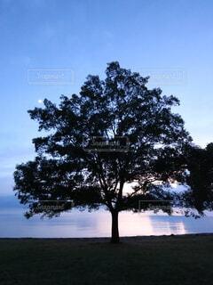 自然,空,屋外,雲,夕焼け,水面,樹木,夕陽,琵琶湖,草木,雨雲